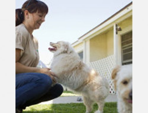 The Cost of Veterinary Care